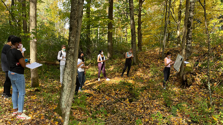 Students studying outside in woods